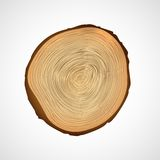 Wood texture of cutted tree trunk. Royalty Free Stock Photography