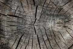 Wood texture of cutted tree trunk. Moss and fungus growing on th Royalty Free Stock Photography