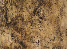Wood texture of dark dried tree. Wood texture of dried tree Stock Photo