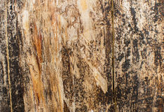 Wood texture of dark dried tree. Wood texture of dried tree Stock Photography
