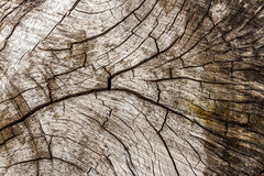 The wood texture for design project. Stock Photo