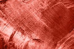 Wood texture of dried tree in living coral color. Color of the year 2019.n stock photo