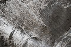 Wood texture of old dried tree Stock Photography