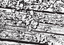 Wood texture. Fiber and crack. Wooden wall. Wood texture. Fiber and crack Royalty Free Stock Photos