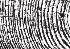 Wood texture. Fiber and crack. Wooden wall. Wood texture. Fiber and crack Stock Photo