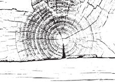 Wood texture. Fiber and crack Royalty Free Stock Images