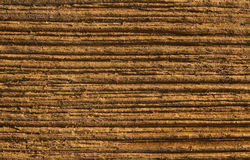 Wood texture grain background, wooden plank Royalty Free Stock Photo