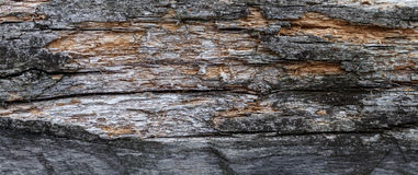Wood texture. Gray timber board with weathered crack lines. Natural background for shabby chic design. Grey wooden floor Royalty Free Stock Photos