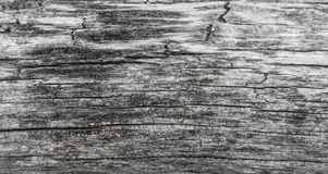 Wood texture. Gray timber board with weathered crack lines. Natural background for shabby chic design. Grey wooden floor Royalty Free Stock Photography