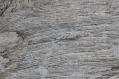 Wood texture. Gray timber board with weathered crack lines. Natural background for shabby chic design. Grey wooden floor Royalty Free Stock Image