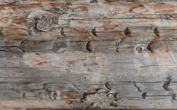 Wood texture. Gray timber board with weathered crack lines. Natural background for shabby chic design. Grey wooden floor Stock Images