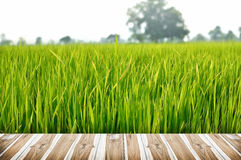 Wood Texture and Green rice field. In the morning Stock Images