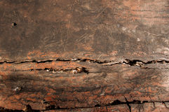 Wood texture groove of wood Royalty Free Stock Photography