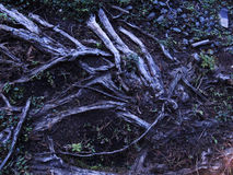 Wood Texture and ground Royalty Free Stock Photos