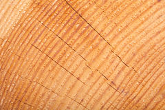 Wood texture with growth rings Stock Photography