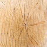 Wood texture with growth rings Stock Images