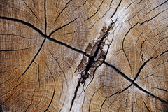 Wood texture, grunge, cracked, high-resolution image Stock Photo