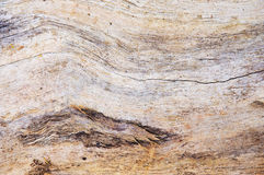 Wood texture. The hard fibrous material that forms the main substance of the trunk or branches of a tree or shrub Stock Images