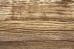 Wood texture of Himalayan tree. Stock Photography