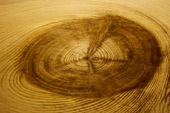 Wood texture with a large bough and pattern of wood fibers, background. Wood texture with royalty free stock photo