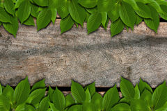 Wood Texture with leaves Royalty Free Stock Photos