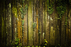 Wood Texture with leaves Royalty Free Stock Photo