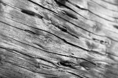 Wood Texture - Macro. Macro view of the texture of a fallen log, black and white. Shallow depth of field Stock Photo