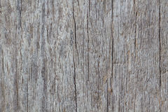 Wood texture of macro. The Wood texture background of macro Stock Image