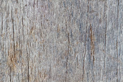 Wood texture of macro. The Wood texture background of macro Stock Images