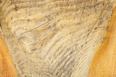 Wood texture macro Royalty Free Stock Photos
