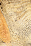 Wood texture macro Royalty Free Stock Photography