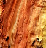 Wood texture macro Stock Photos