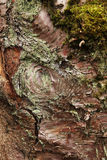 Wood texture with moss Stock Image