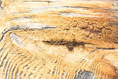 Wood texture with natural background Royalty Free Stock Image