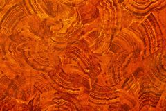 Wood texture. With natural pattern stock photography