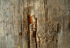Wood texture with natural pattern Royalty Free Stock Photography
