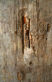Wood texture with natural pattern Stock Photos