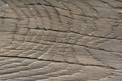 The old wood texture with natural patterns royalty free stock images