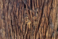 Wood Texture With Natural Pattern. The skin of the tree is long Stock Image