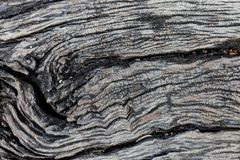 Wood Texture With Natural Pattern. The skin of the tree is long Stock Photo