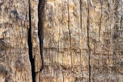Wood Texture With Natural Pattern. The skin of the tree is long Royalty Free Stock Images