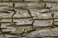 Wood texture with natural patterns, Background old panels, The b Stock Photo