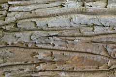 Wood texture with natural patterns, Background old panels, The b Stock Photography