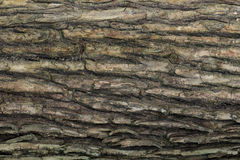 Wood texture with natural patterns, Background old panels, The b Stock Image