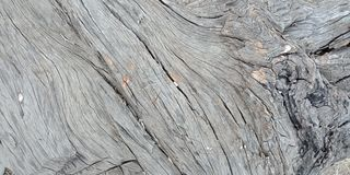 Wood with texture,nature landscapes, Lakhnadon India, picture taken on February 2018,landscapes background. Uses for landscapes, backgrounds,etc Stock Images