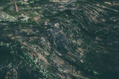 Free Wood Texture Of Tree Trunk Closeup. Rough Wood Texture And Background For Design. Old Vintage Tree Trunk Background. Stock Image - 110998181