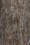 Wood texture. The old wood texture background Stock Photography