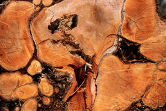 Wood texture. Old big tree cut background stock photos