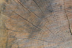 Wood texture. Texture of the old cracked wood Royalty Free Stock Images