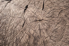 Wood texture of old cut tree trunk Royalty Free Stock Image